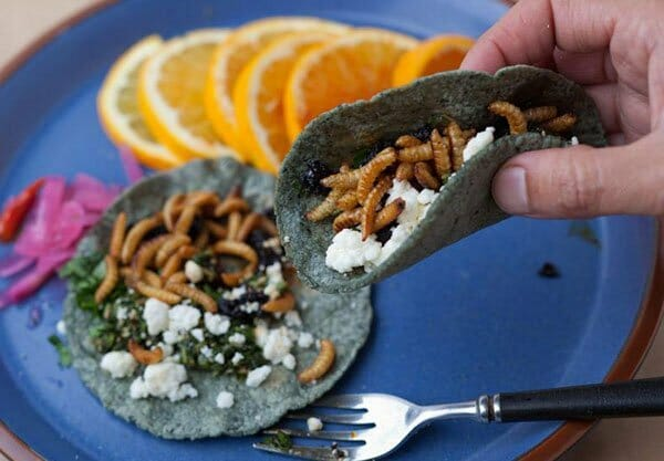 Tacos of ant larvae. Provecho.