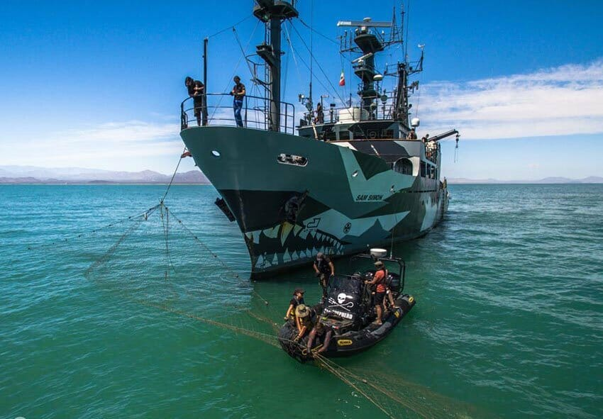 Sea Shepherd boats pull up a gillnet in the upper Sea of Cortés