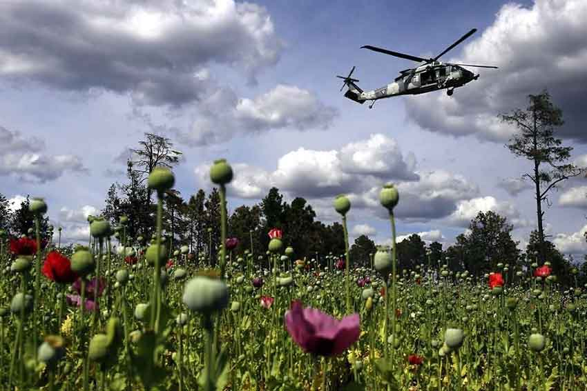 A military patrol flies over a Mexican poppy plantation.