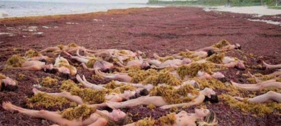 The seaweed invasion has been described as a potential natural disaster.