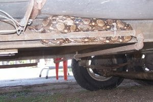 The boa constrictor trapped on a motorhome.