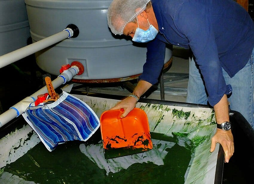 A silk screen is used to harvest the spirulina.