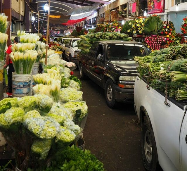 Pick ups loaded with lilies enter the market.