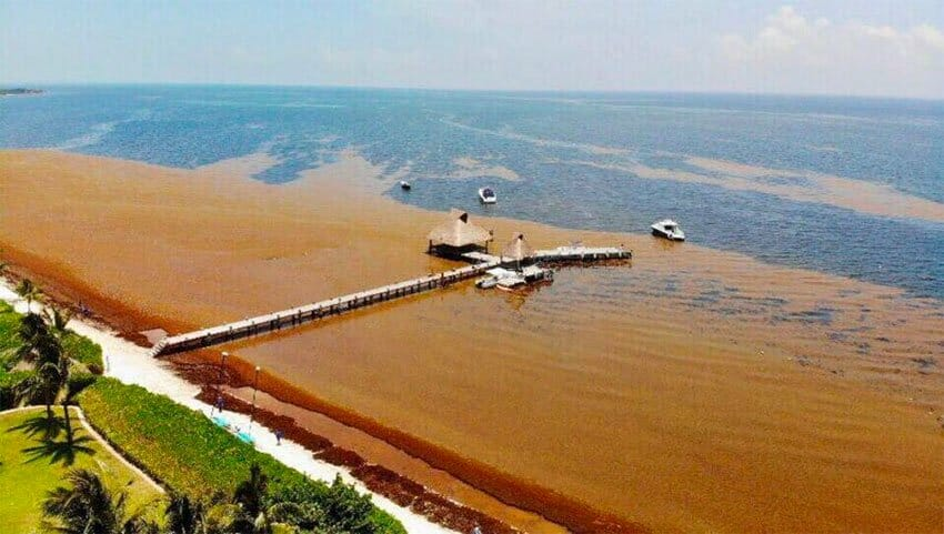 One estimate says a million tonnes of sargassum can be expected this year.