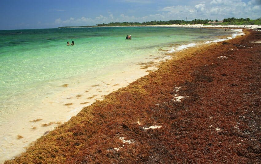 The summit was intended to discuss strategies to deal with sargassum at the international level.