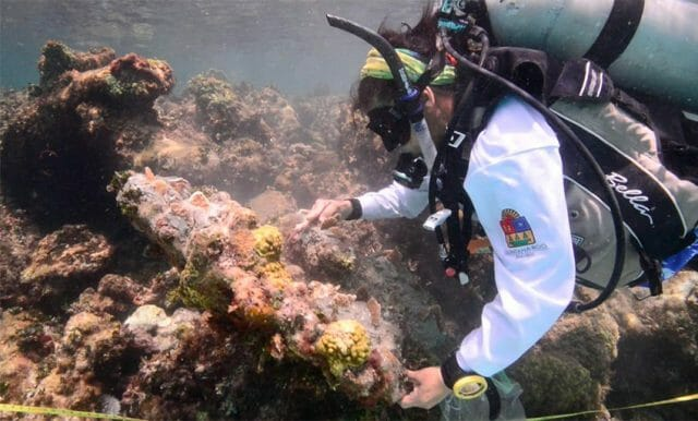 Divers planted 3,000 colonies of coral on Thursday.