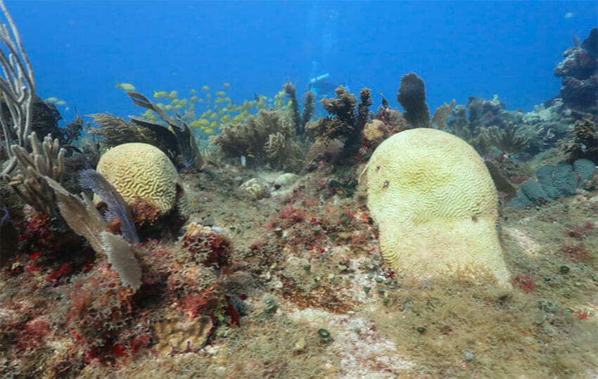 An estimated 42% of coral reefs have been affected.