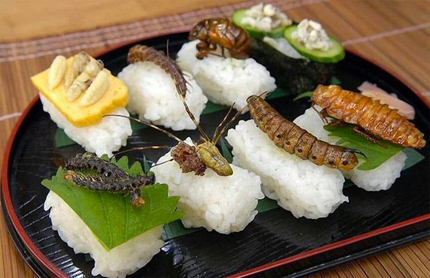 More than 500 insects can be found in Mexican cuisine.