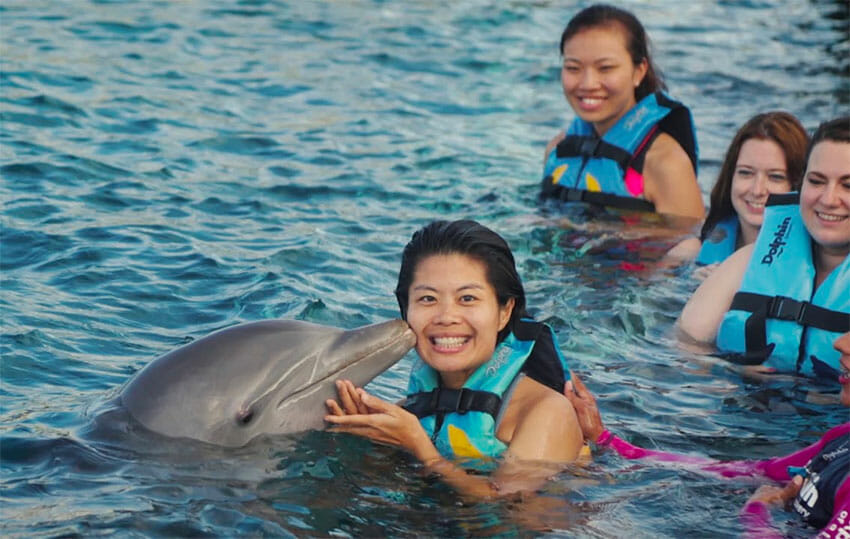 Visitors swim with dolphins at a Dolphin Discovery park.