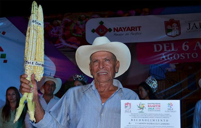 The 2016 winner with 45-centimeter cobs.