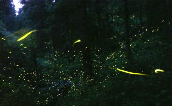 Fireflies at the sanctuary in Tlaxcala.