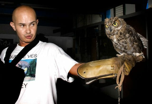 An owl is taught how to hunt.