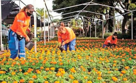 Workers tend marigolds at the municipal nursery.
