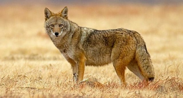 Coyotes (the two-legged kind) save many Mexicans time and headaches at government offices, processing paperwork much more efficiently.