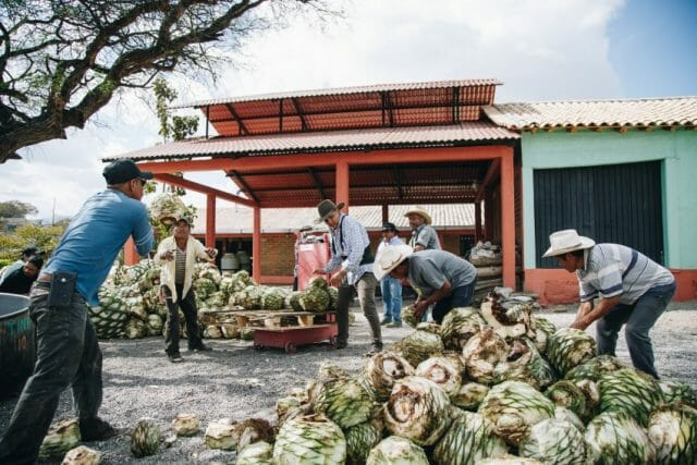 At Gracias a Dios distillery, workers stack agave hearts.