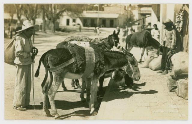 Donkeys are long associated with Mexico, but they are not native to the country. They were actually brought here by Spanish colonists.