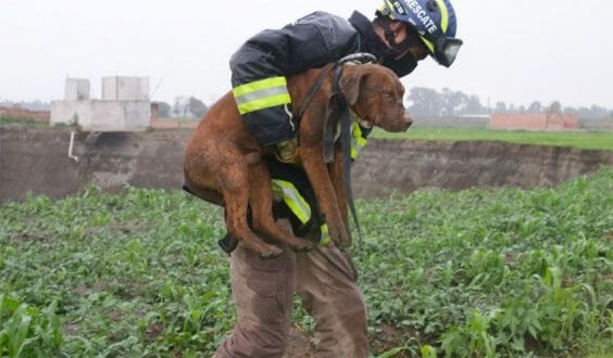 A rescue worker with one of the two dogs that fell into the huge sinkhole.