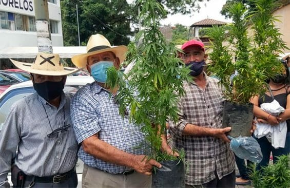 With marijuana plants in hand, Morelos farmers made their case for a license
