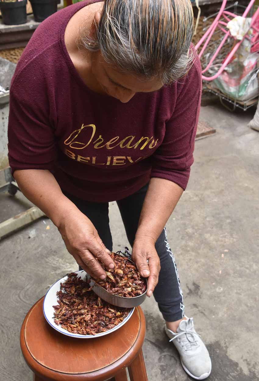 Packing grasshoppers into a tin for sale