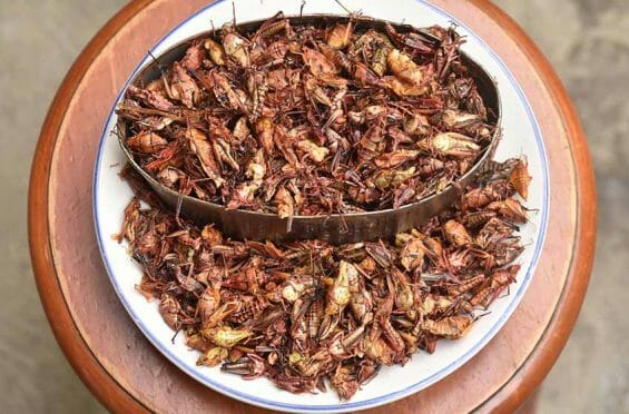 cooked grasshoppers